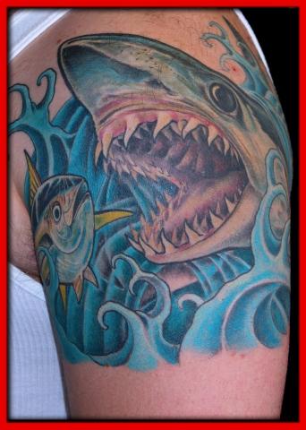 shark tuna 1
