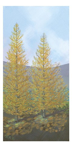 Greeting cards, postcards, Larch tree, larix sibirica.