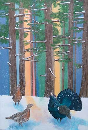 Capercaillie, Lek, caledonian forest, greeting cards, postcards.