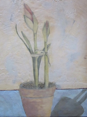Amaryllis with Shadow