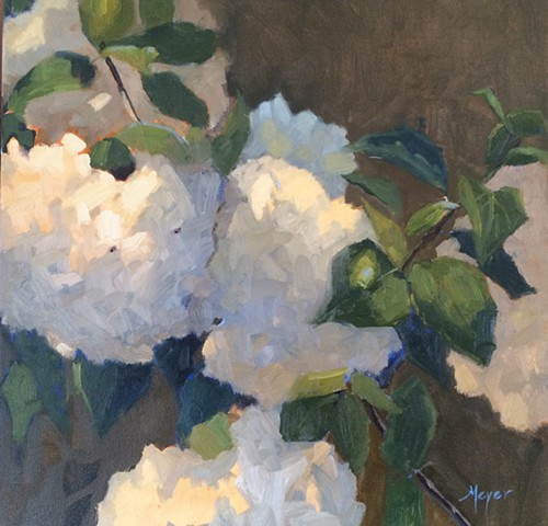 Hydrangeas at Noon
