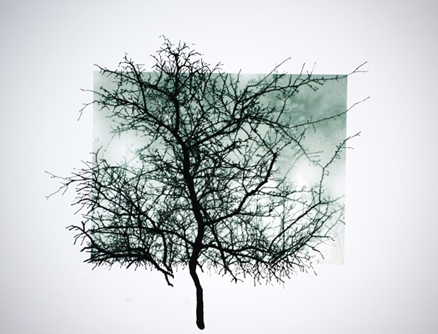 Art Trees Digital Photograph Ink Drawing by Ian Crawley
