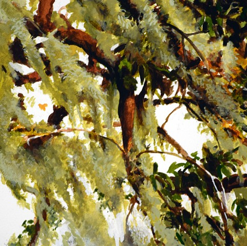 Art Savannah Tree Watercolor study by Ian Crawley