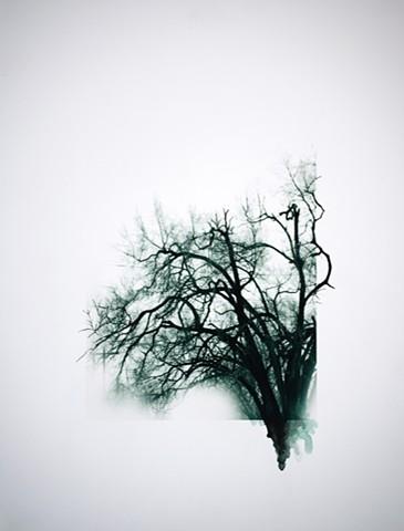 Art Tree Digital Photograph Ink Drawing by Ian Crawley