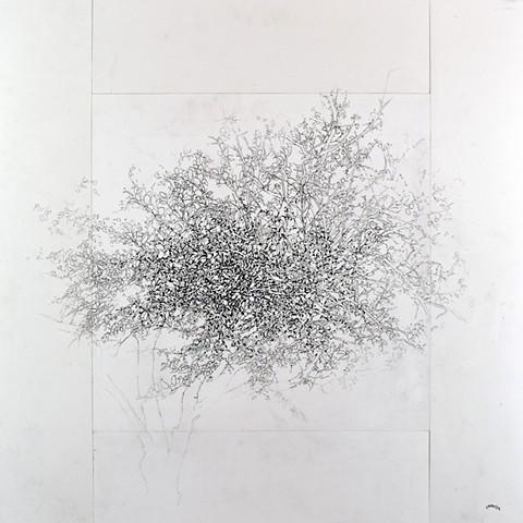 Art Tree Graphite Ink Drawing by Ian Crawley
