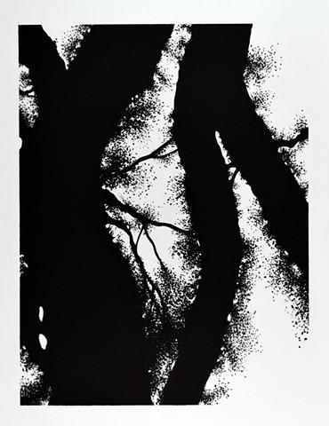 Ian Crawley Art Tree Branch Abstract Ink Drawing