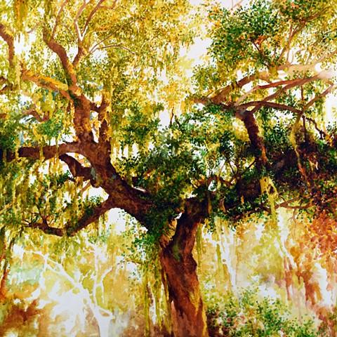 Art Plantation Tree Savannah Watercolor by Ian Crawley