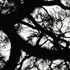 Savannah Tree 3