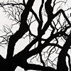 Savannah Tree Branch Abstract Large 10