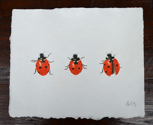 A new drawing of three Ladybirds - available to buy