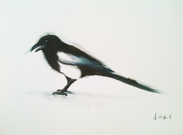 An Ink and Watercolour painting of a Magpie.