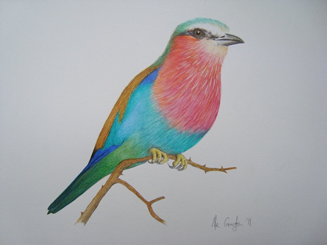 'Lilac-Breasted Roller'