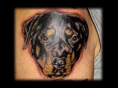 rottweiler dog portrait tattoo by tatupaul