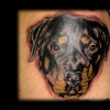 rottweiler dog portrait tattoo by tatupaul