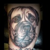 mastiff dog tattoo by tatupaul