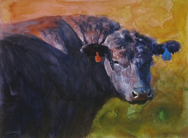 Black Angus bull up close, looking at viewer.