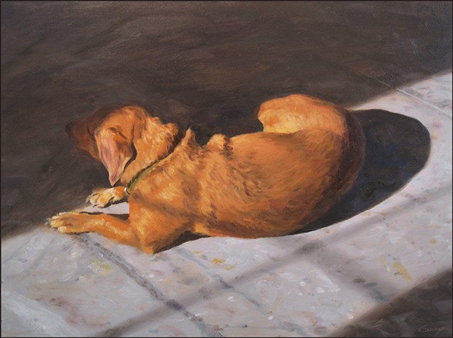 dog, animal, pet, sleeping, laying, indoors, sunlight, shadow