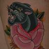 Panther Rose