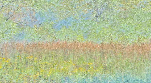 big bluestem 2