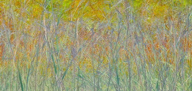 big bluestem 1