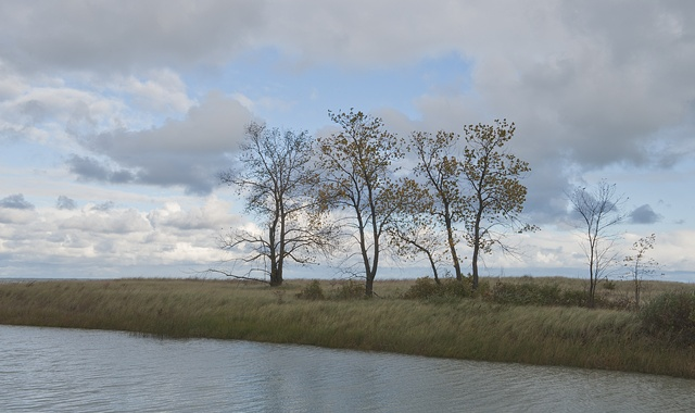 cottonwoods at the dead river 2
