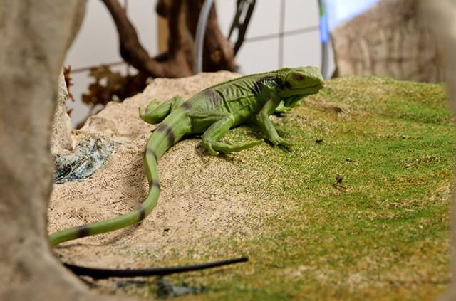 Mnemosyne_ Detail_lizard