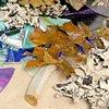 Mnemosyne_Detail_Bone,Lichen,Leaf