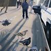 Extinctiosextus pigeon