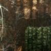 Shado-9  forest