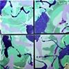 Bubblescape Splash I-IV