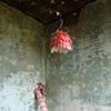 garden residue (lamp)