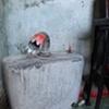 garden residue ( toilet top)