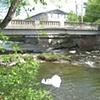hide n seek ongoing series/bridge
