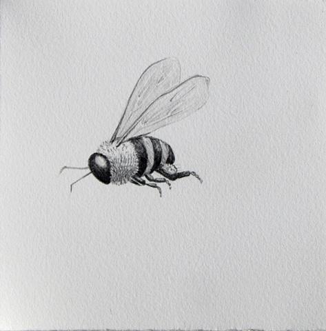 Swarm Series