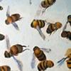 Swarming Universe