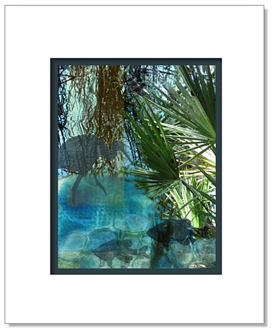 Shadows of a wading bird and two fish overlaid on photos of water and palmettos