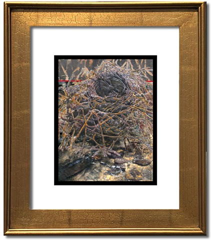 A detailed stitched image of a bird nest layered with photo of a shallow stream