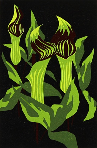 Emily Gray Koehler - Jack in the Pulpit