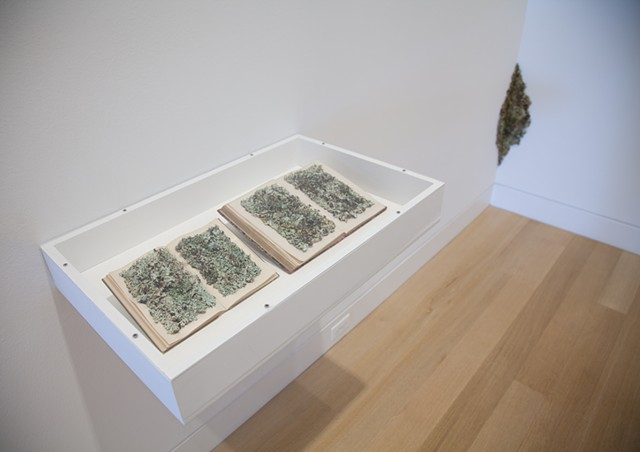 'New Kinds of Words III & IV' at the DePaul Art Museum with 'Encrustation (Lichen)' seen in the corner
