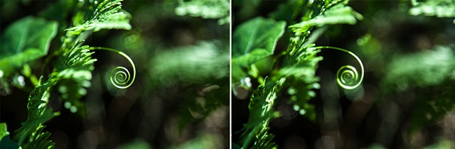 Pictures I Made While Walking in the Woods (Thinking about human fascination with spirals I & II)