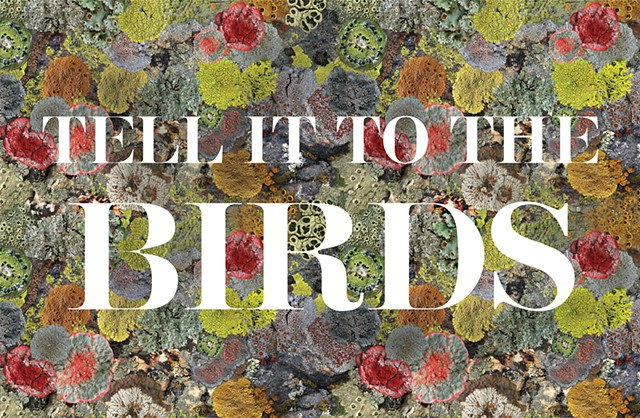 Verso of Field Guide for 'Tell it to the Birds'