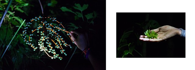 Pictures I Made While Walking in the Jungle (Night Walk, Palm Fruits & Fallen Orchid)