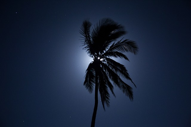 Pictures I Made While Walking in the Jungle (Moon Behind Tall Palm, Costa Rica)