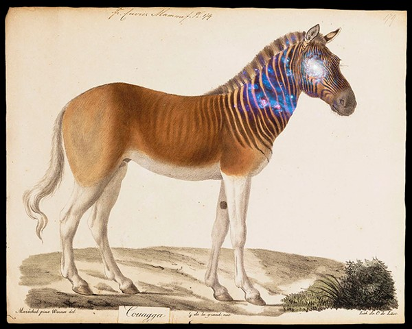 'Endless Quagga' From the 'Cosmos' series