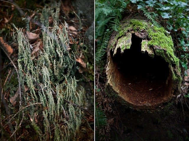 Pictures I Made While Walking in the Woods (Lichen, Norway & Hollow Log, Oregon)