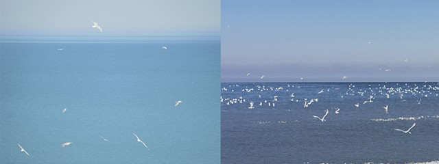One Hour of Birds [Katherine Trumbull Fimreite  - Watching from her window overlooking Lake Michigan, Chicago (left) & One Hour of Birds  – Devotion, Edgewater Beach, Chicago (right)]