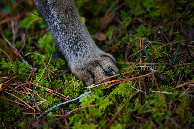 Pictures I Made While Walking in the Woods (His Paw, Western Virginia Mountains)