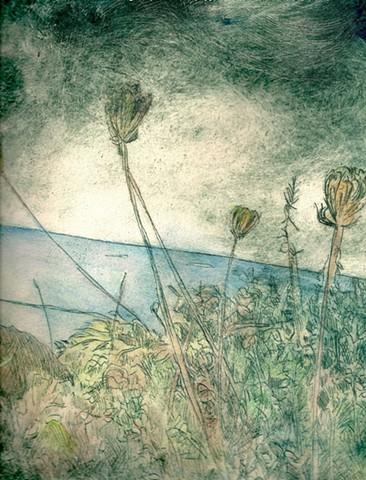 Arcata Landscape