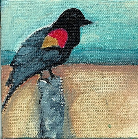 April 19 A beautiful red-winged blackbird came and sat down near me at the beach, wanting food.  He flew away when he saw that all I had left was onions.