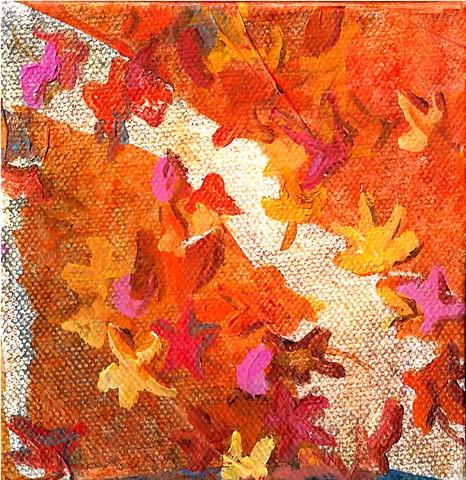 January 3  Sweetgum leaves scattered on the sidewalk.